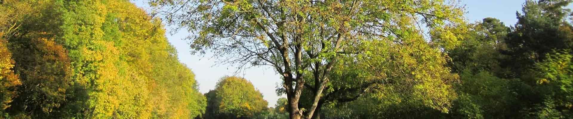 groupe de spécialistes Gámiz en bois de frêne