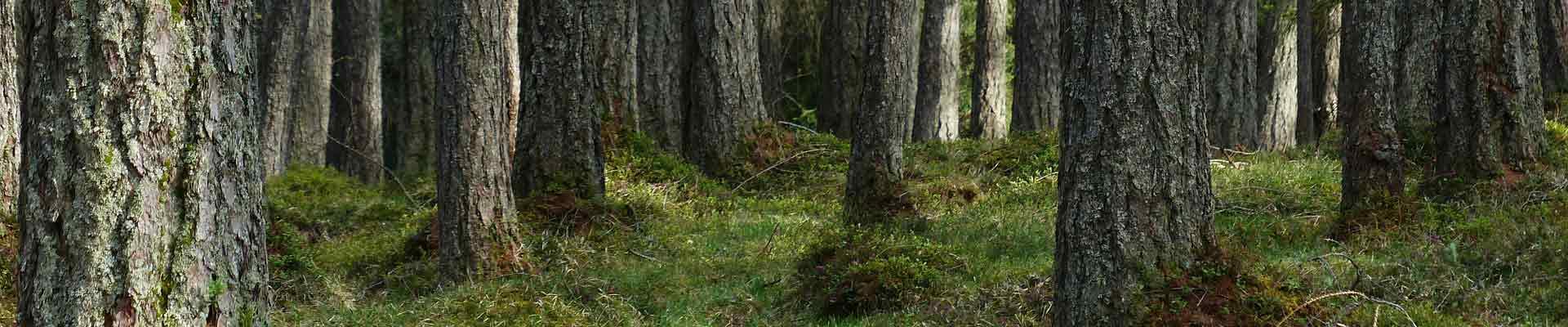 Spécialistes du Grupo Gámiz en bois de pin