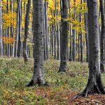 Grupo Gámiz Hague wood