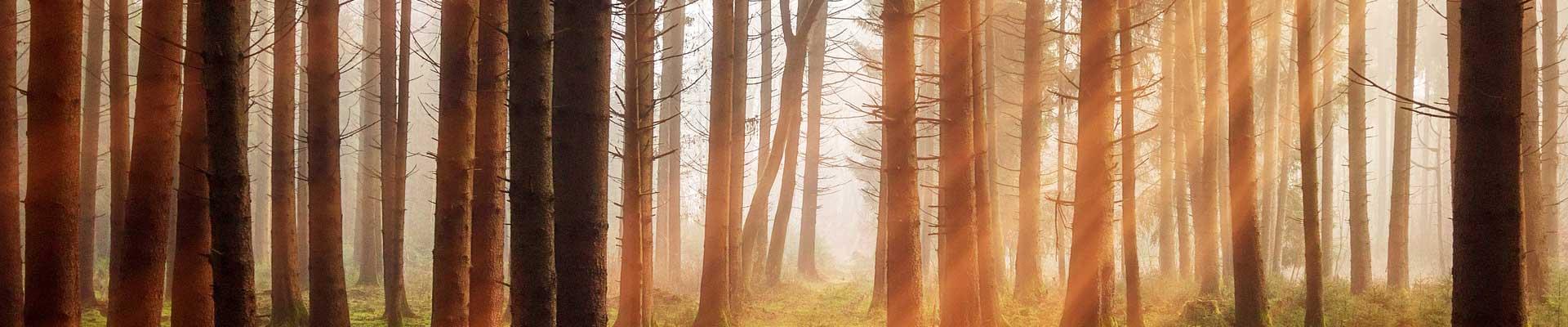 Grupo Gámiz especialistas en madera de pino radiata